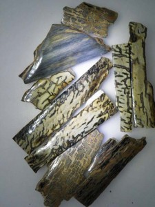 Rare and exotic polished FOSSIL MAMMOTH IVORY Bark